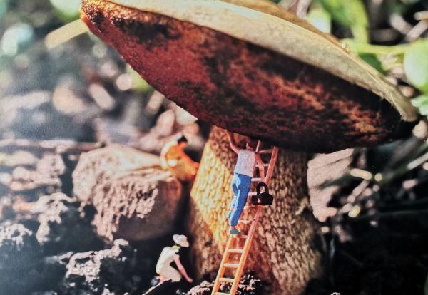 Postkarte Pilz